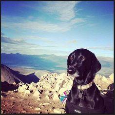 El perro más inexpresivo en el mundo | Las 100 fotos de perros más importantes de todos los tiempos