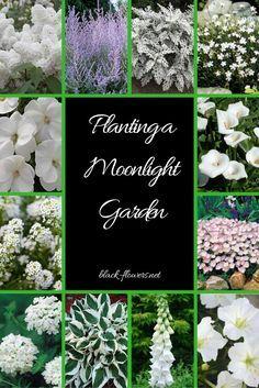 Flower garden Inspiration Enjoy Moonlight Gardens at Night Shade Garden, Garden Plants, Flower Gardening, Organic Gardening, Beautiful Gardens, Beautiful Flowers, Night Blooming Flowers, Night Flowers, Gothic Garden