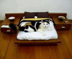 Cool cat bed
