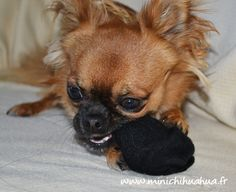 Harybo en train de jouer avec des chaussettes
