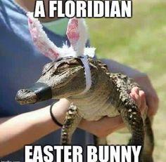 a floridan Easter bunny,baby alligator,meme