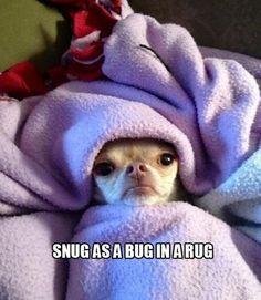 Snug as a...