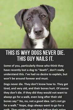 I'm sorry, I know this board is suppose to be fun but this is just too powerful and meaningful. Yes you will cry reading this, but honestly it's worth it. Hug your dog please. Love your dog All Dogs, I Love Dogs, Dogs And Puppies, Aussie Puppies, Animals And Pets, Cute Animals, Pet Loss Grief, Loss Of Dog, Food Dog