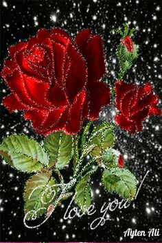 Beautiful Flowers Photos, Unusual Flowers, Beautiful Flower Arrangements, Beautiful Gif, Beautiful Roses, Pretty Flowers, Jesus And Mary Pictures, I Love You Pictures, Love You Gif