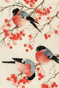 by An-Bird on DeviantArt Watercolor Bird, Watercolor Animals, Watercolor Paintings, Art And Illustration, Watercolor Christmas Cards, Bullfinch, Bird Drawings, Bird Pictures, Deviantart