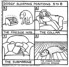 Off the Leash - A Doggy Blog - Doggy Sleeping Positions 5 to 8…
