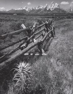 1965 Rail Fence, Thistle and the Teton Range, Wyoming by Ansel Adams 84.92.537