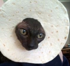 Get this freaking tortilla off my head!