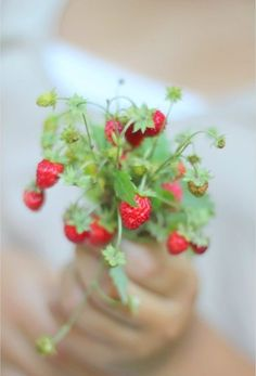 ~blissful country life / the beauty of picking wild strawberries
