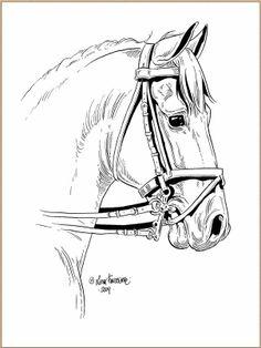 Lena Furberg horses dressage horse