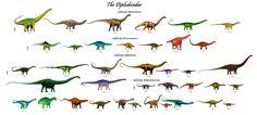The Diplodocidae: 38 Genera in 4 Subfamilies