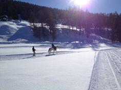 Ski joëring à l'Espace Mont-Noble à Nax. Pour découvrir les joies de la glisse tracté par un cheval Outdoor, Joy, Outer Space, Horse, Outdoors, Outdoor Living, Garden