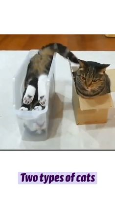 Funny Cute Cats, Cute Baby Cats, Cute Cats And Dogs, Cute Little Animals, Cool Pets, Cute Funny Animals, Kittens Cutest, Animals And Pets, Toasters