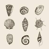 seashell tattoos - Google Search
