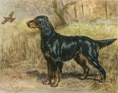 Gordon Setter Vintage Dog Illustration  Edwin Megargee by RoxyRani, $9.00