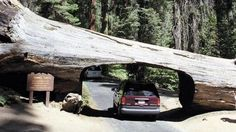 Nej národní parky Severní Ameriky – to jsou stromoví velikáni i domov Médi Bédi! | Cestovinky