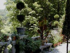 Michael Trapp's Garden in West Cornwall