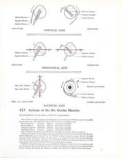 Vintage Framed Anatomy Print Eyeballs 1960s by maddoxandrose