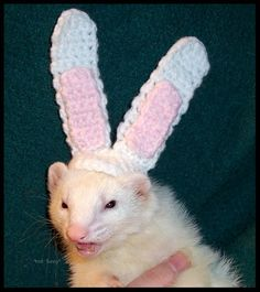 grumpy ferret in crocheted bunny ears. crochet. rabbit. funny. animal humor. easter.