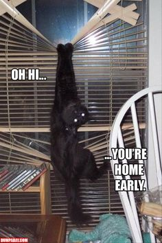 A cats and blinds funny pictures (9)