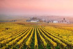 Vineyards in the mist at sunrise, Oger, Champagne, France - Matteo Colombo/Getty Images.  France  From the end of September and into October, spectacular bursts of fall color can be seen in Strasbourg, the Loire Valley, Chaumont-sur-Loire and Chambord.  (Pictured) Mesnil sur Oger, Champagne Ardenne
