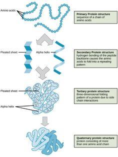 protein structure.jpg
