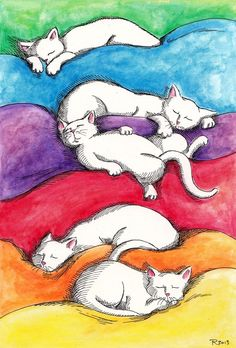 Rainbow napping. (Cats sleep like it's their job. It's a skill that never fails to impress me).