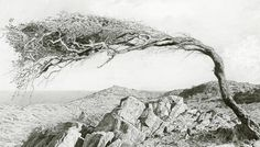 """I think the tree is an element of regeneration which in itself is a. - but does it float"" Beautiful graphite drawing by Marissa Textor. Wuthering Heights, Graphite Drawings, Foto Art, Traditional Art, Art Blog, Painting & Drawing, Illustration Art, Illustrations, Black And White"