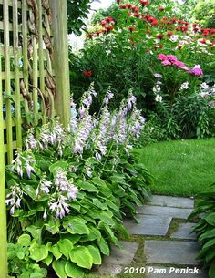 the hostas under the arbor looking back at the flower beds