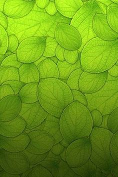 #abstract #leaves #green