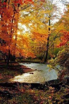 Autumn's beauty ~