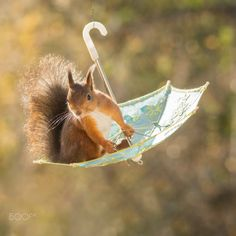 umbrella swing by Geert Weggen on 500px