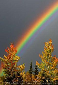 Fall rainbow, Alaska