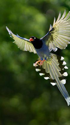 Welcome to my beautiful birds board!