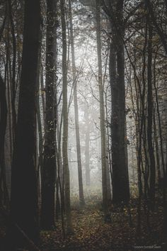 T.V.O.O.M. Ocean Storm, Miles To Go, Misty Forest, Ansel Adams, Aesthetic Anime, Mists, Paths, Nature Photography, Landscape