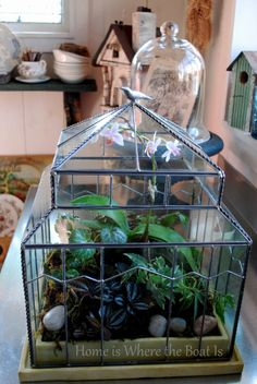 Garden under glass with a terrarium for a fun winter DIY project to add a little green indoors. Easy and self-sustaining and best of all, no green thumb required! Indoor Garden, Indoor Plants, Outdoor Gardens, Air Plants, Air Plant Terrarium, Glass Terrarium, Dish Garden, Fruit Garden, Mini Greenhouse