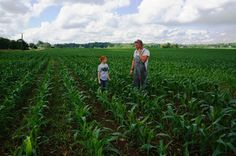 My son, Jack, and husband, Lad, examine this corn field and have a chat.