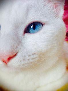 cat 2014年10月 : ねこごち