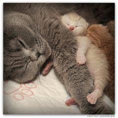 L'amore delle mamme,anke se animali...