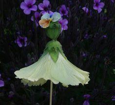 Thyme In A Bottle: Hollyhock Dolls, Abutilon Dolls, Flower Dolls Dig Gardens, Fairy Gardens, Hollyhocks Flowers, Language Of Flowers, Summer Memories, Feather Tattoos, Nature Crafts, Flower Crafts, Perennials