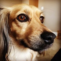 Are you following Modern Mongrel on Facebook? #celebrity #dog #cute