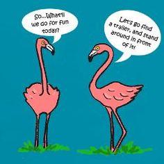 Flamingo humor