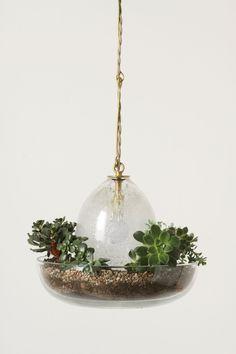 Terrarium Pendant Lamp - Anthropologie.com