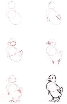 Learn to draw: Duckling