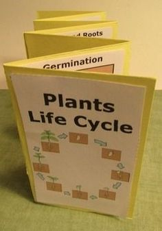Plants: Your students will love this printable hands-on plants life cycle interactive notebook activity. The students will make a plants life cycle accordion book. The students will need to research plants to discover fun facts about each stage of the life cycle.