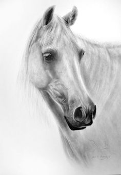 Buy White Horse, Oil painting by Danguole Serstinskaja on Artfinder. Discover thousands of other original paintings, prints, sculptures and photography from independent artists.