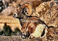 Ram Animal Art Print