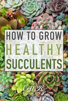 succulent garden care How To Grow Healthy Succulents Succulent Outdoor, Succulent Landscaping, Succulent Gardening, Succulent Care, Succulent Containers, Container Flowers, Container Plants, Vegetable Gardening, Landscaping Ideas