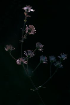 303 best somber and solemn images on pinterest dark forest sanwik my photography m4hsunfo