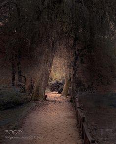 Pathway by SejmenovicMevludin #Landscapes #Landscapephotography #Nature #Travel #photography #pictureoftheday #photooftheday #photooftheweek #trending #trendingnow #picoftheday #picoftheweek